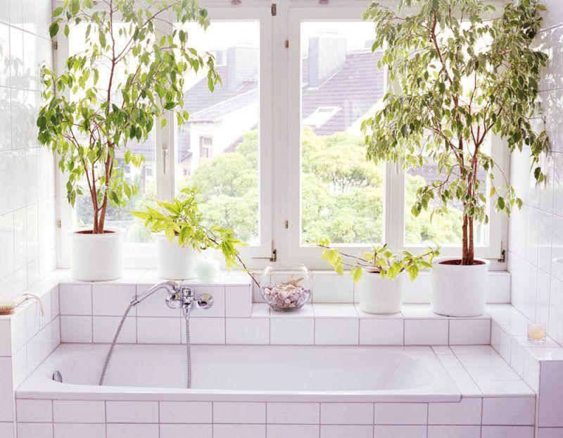 Las plantas son grandes compañeras de la decoración del baño y ayudan a renovar su energía. Prepara este espacio para mimarte acompañada de la naturaleza.