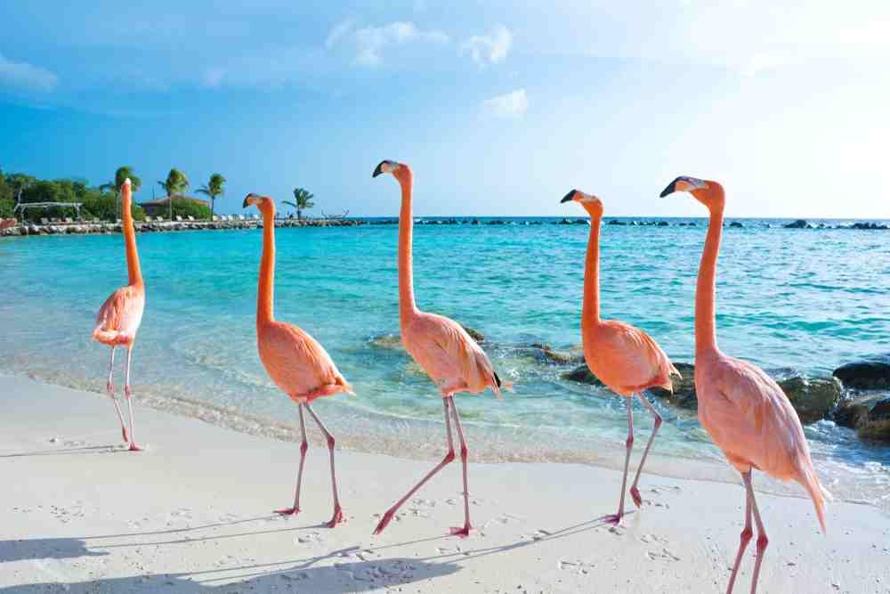 En verano vive la experiencia de unas vacaciones en Flamingo Beach. Una playa de arenas blancas y aguas turquesas vigiladas por hermosos flamingos.
