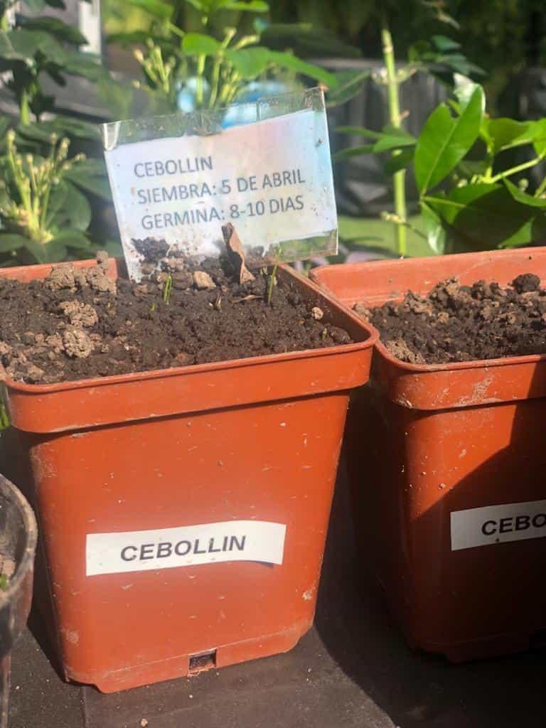 Marca en tu huerto la fecha de siembra y los días de germinación.