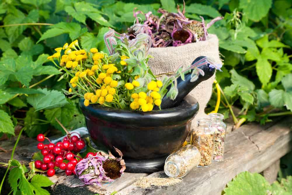 La aromaterapia es una ciencia que se basa en el uso de aceites extraidos de las flores y las hierbas.