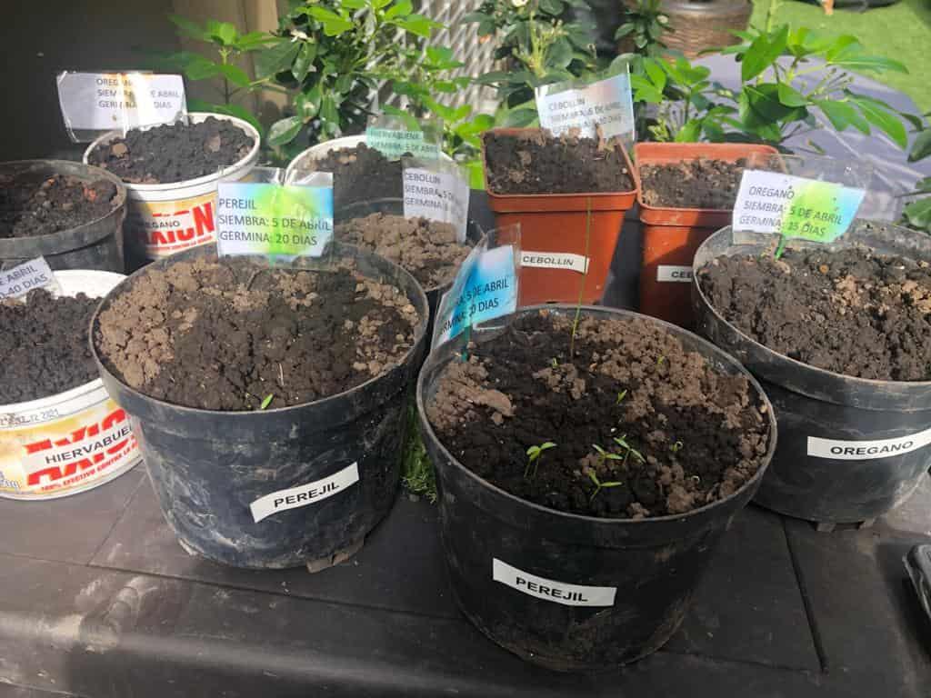 Es importante que identifiques las plantas que siembras en cada maceta para no confundirte. Usa los recipientes que no uses en casa para la siembra.