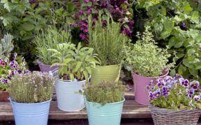 Si quieres darle alegría a la cocina o al jardín siembra algunas plantas aromáticas en potecitos de colores.