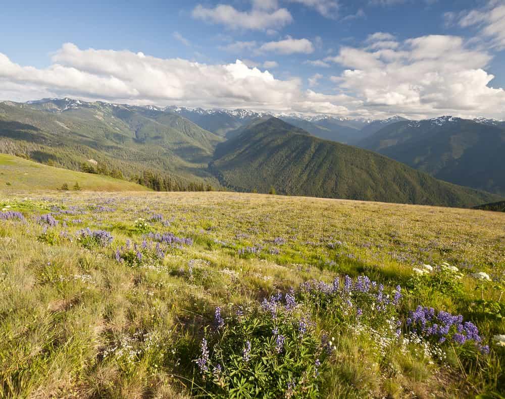 El ecoturismo es muy popular en el Olympic National Park en Washington. En sus montañas hay más de 250 especies de aves para admirar.